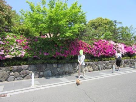 IMG_488516Gw嵐山