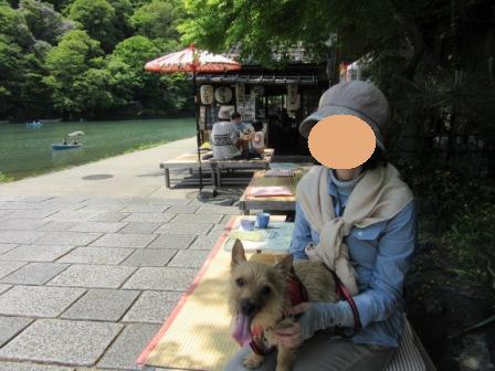 IMG_489716GW嵐山