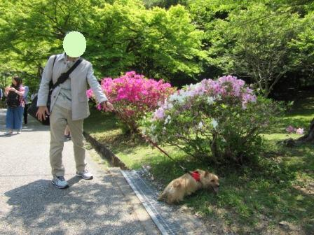 IMG_490716GW嵐山