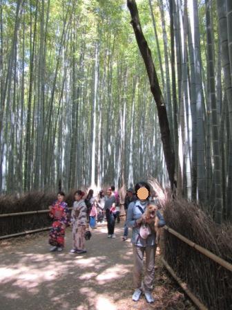 IMG_493216GW嵐山