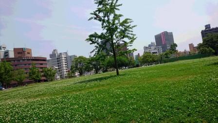 DSC_052516・6草刈り