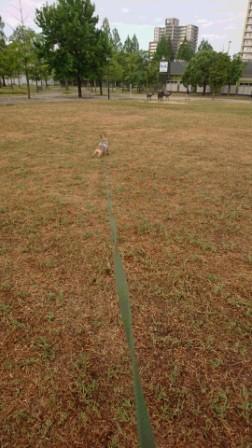 DSC_086816・8・17草刈り後
