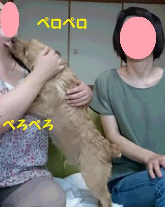 DSC_0891 16・8・27花&ゆずママs