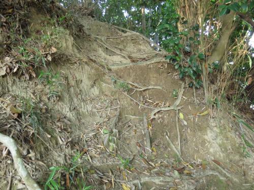 竜金寺36
