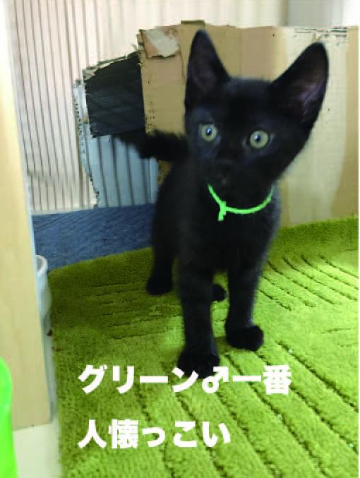 satsukig2.jpg