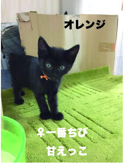 satsukio1.jpg