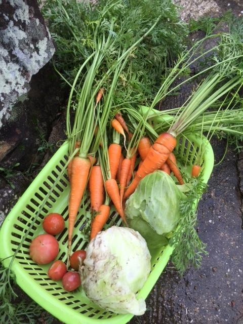 0630収穫