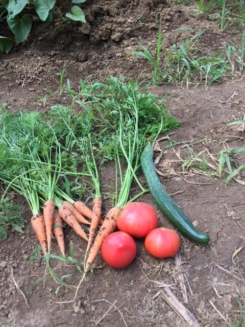 0703収穫