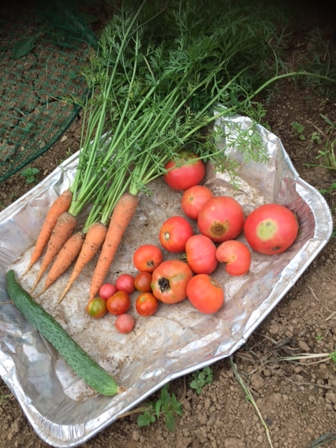0707収穫2