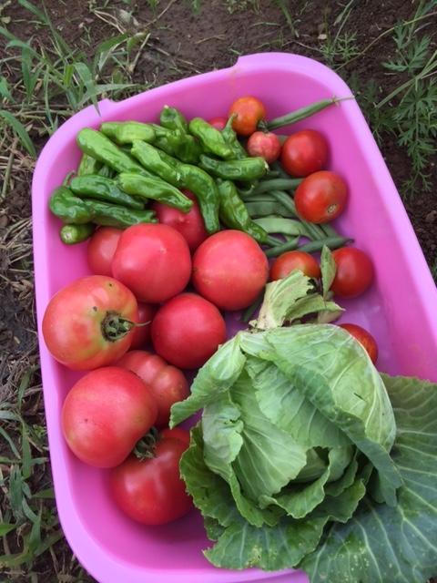 0712収穫2