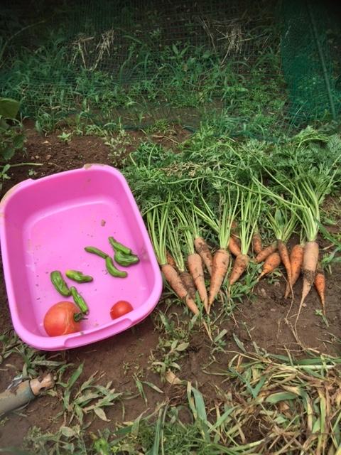 0714収穫1