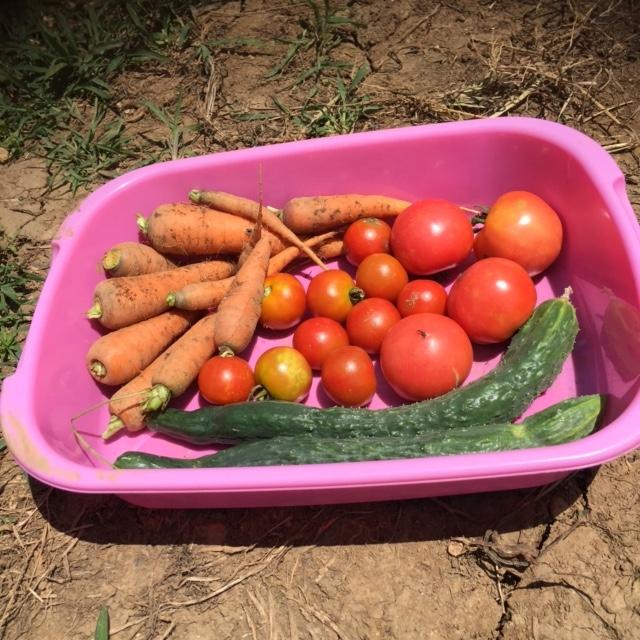0722収穫