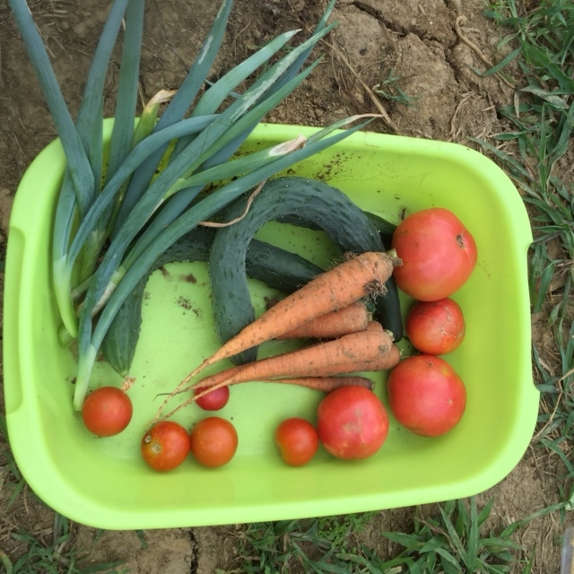 0724収穫