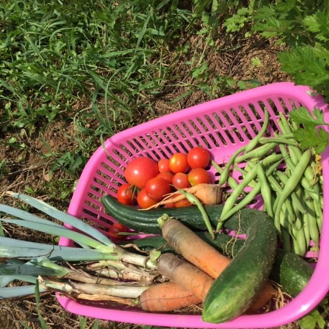 0802収穫