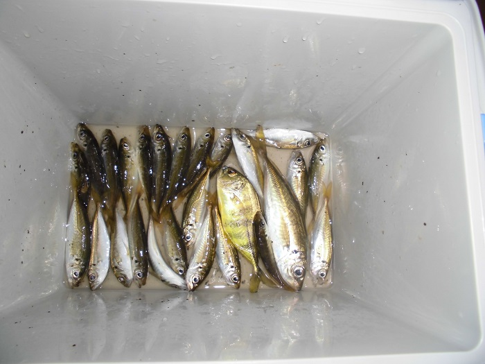 0817魚2