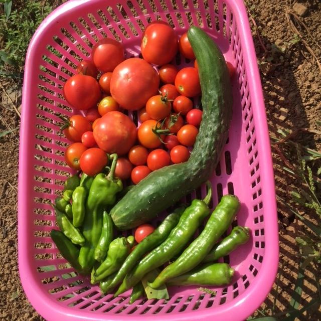 0818収穫