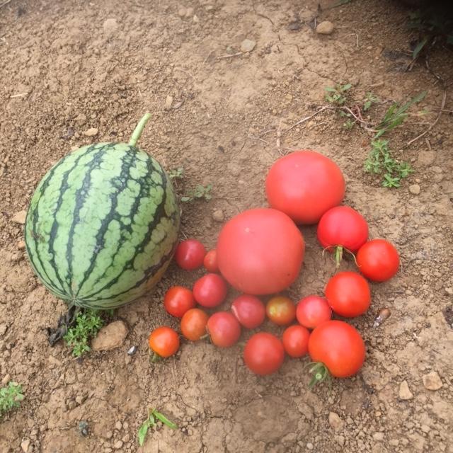 0901収穫