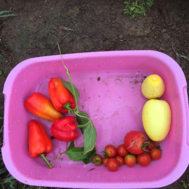 0904収穫