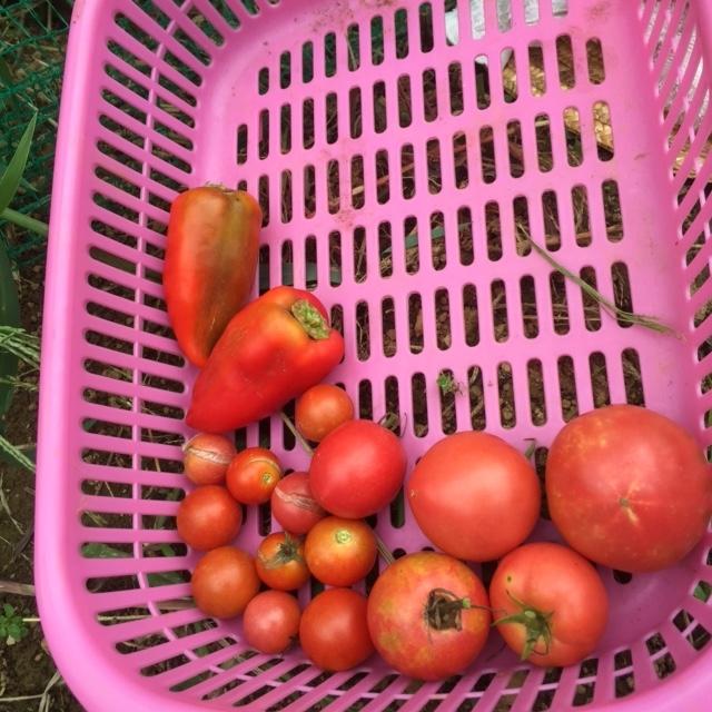 0917収穫