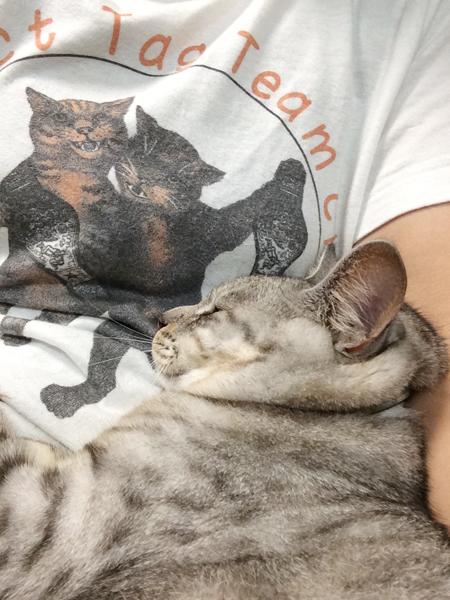 しおちゃんとTシャツ