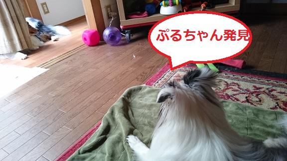 DSC_4737_2016061501260252d.jpg