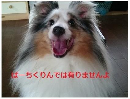 DSC_4891_20160621223614990.jpg