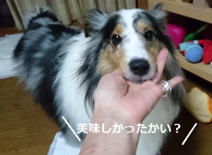 DSC_5991_20160725001855fe0.jpg