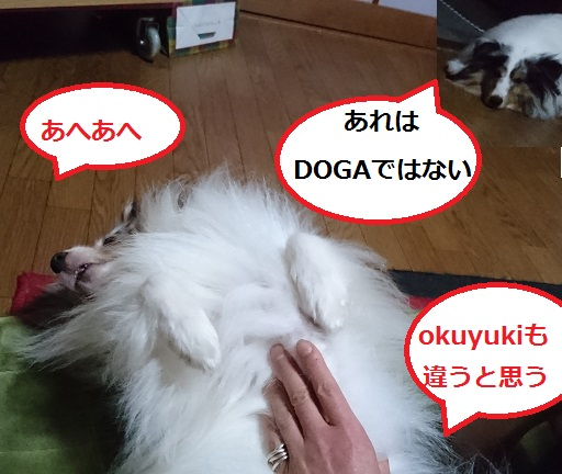 DSC_7532.jpg