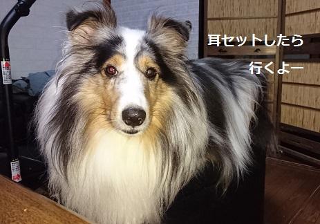 DSC_8168.jpg