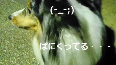 MOV_3323(1).jpg