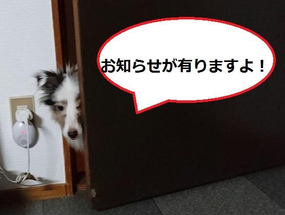 MOV_7632(2).jpg