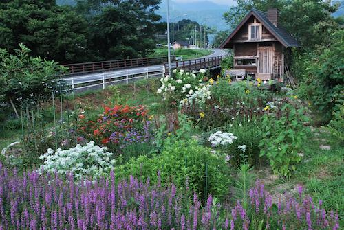 20160729花壇