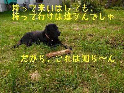 DSCN8127ZZZ.jpg