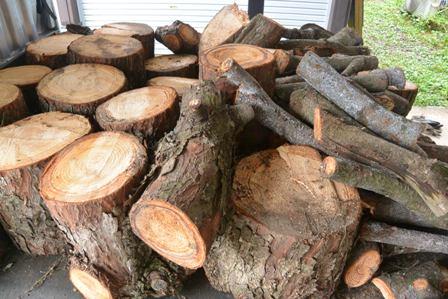 伐採した松