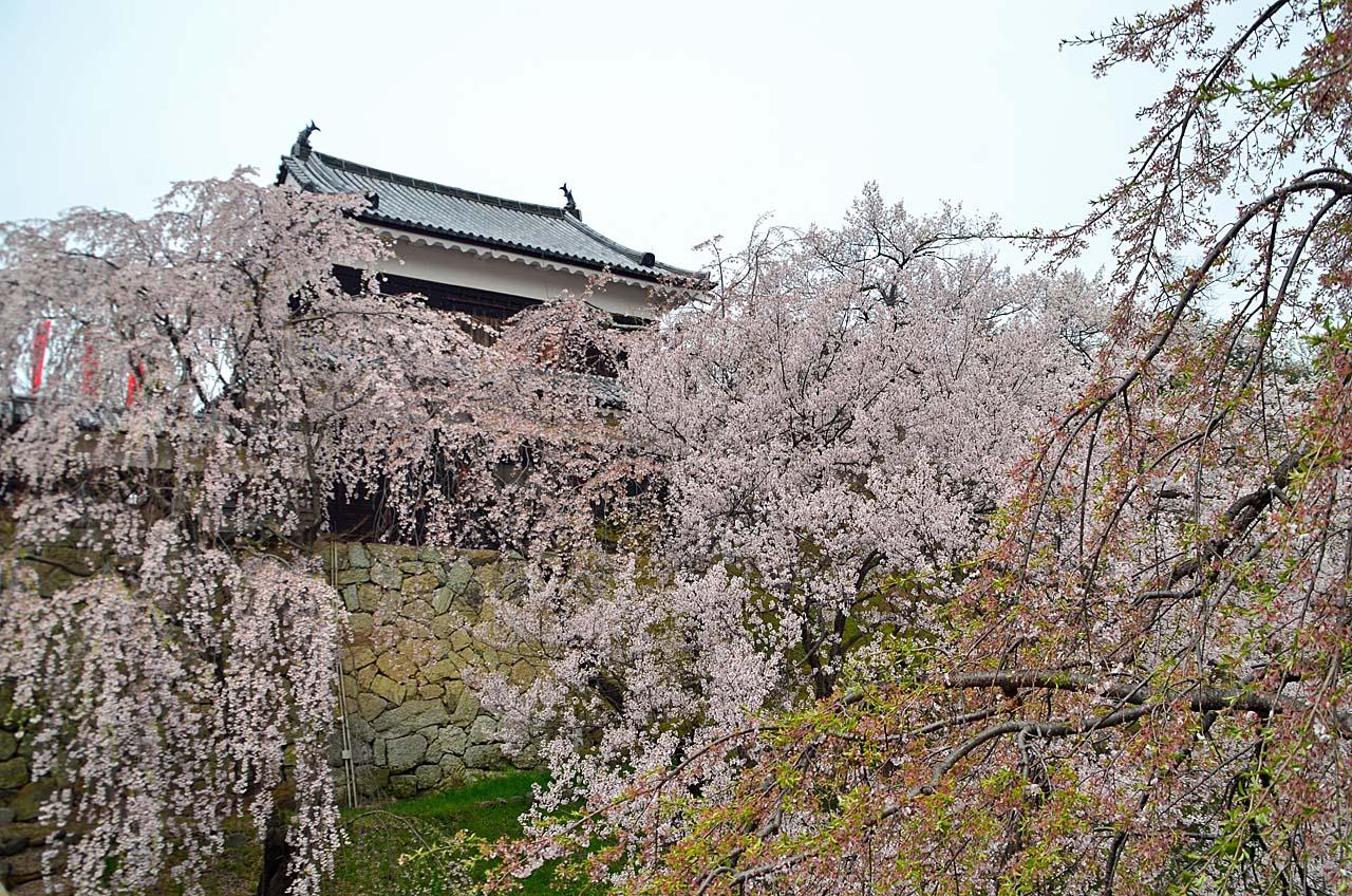D70_8918上田城跡の桜