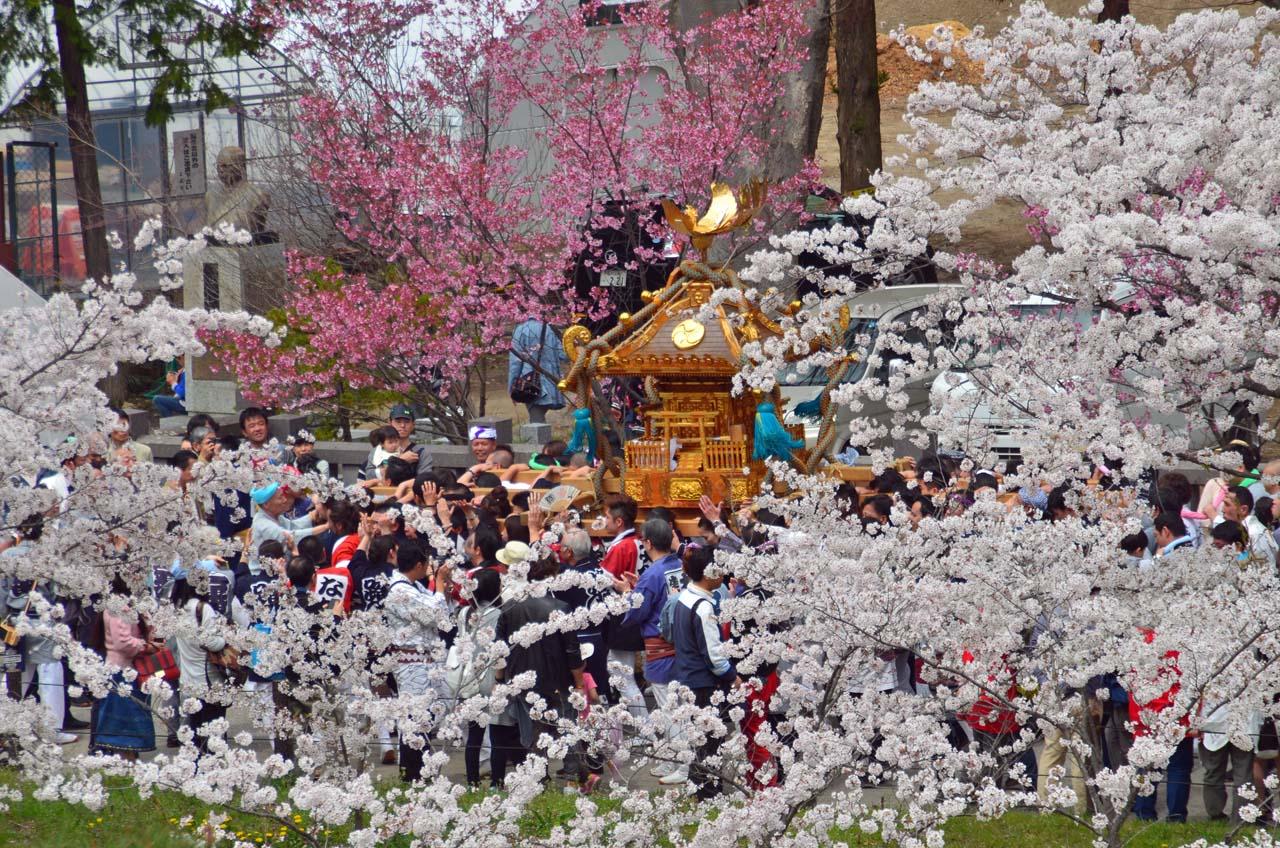 D70_8950上田城跡の桜