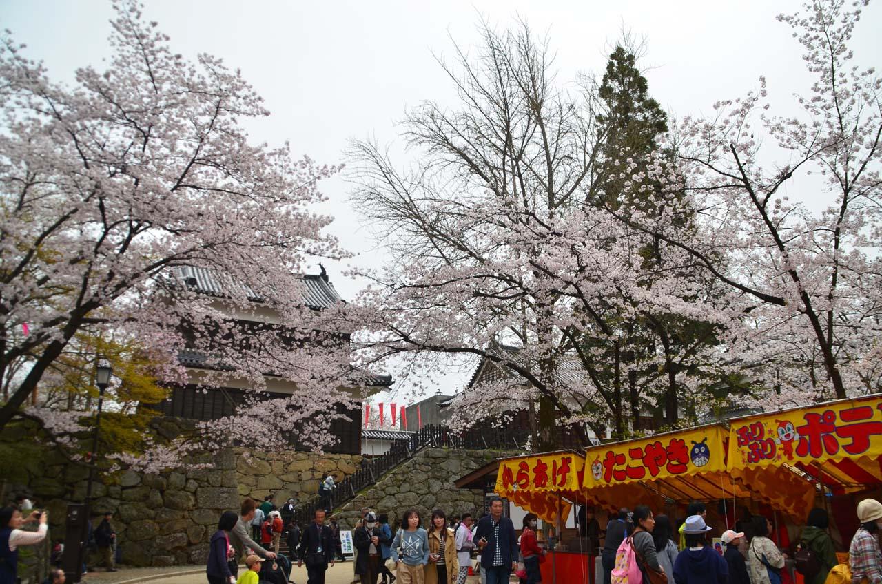D70_8929上田城跡の桜