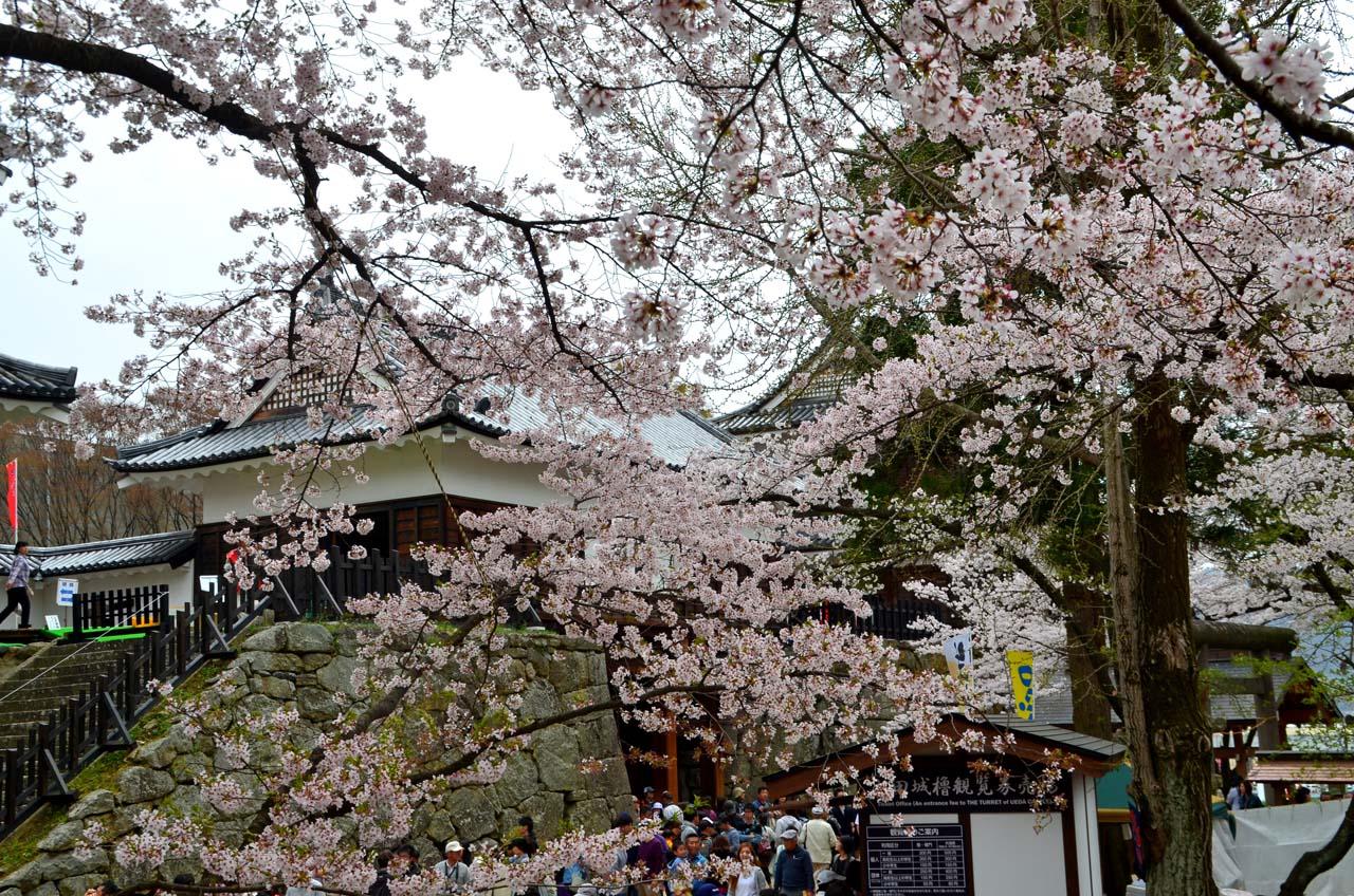 D70_8943上田城跡の桜