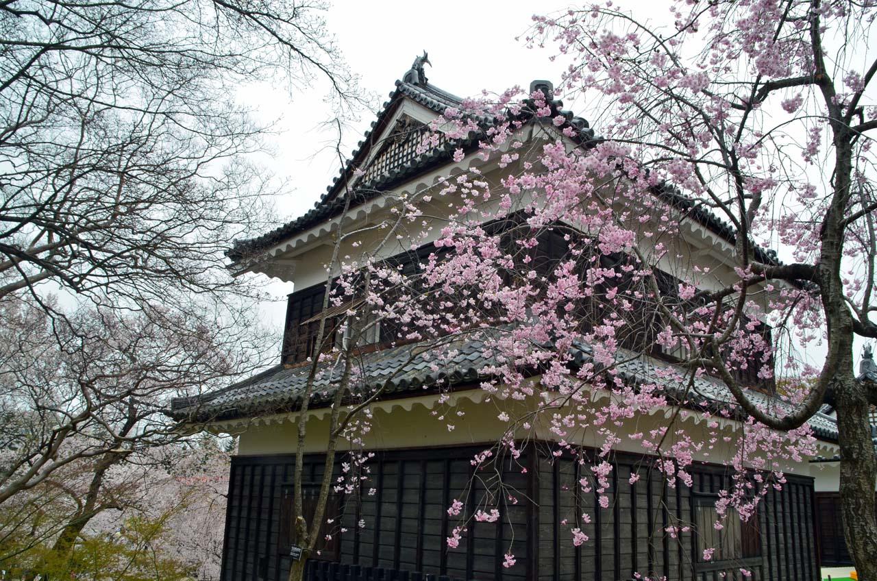 D70_8975上田城跡の桜