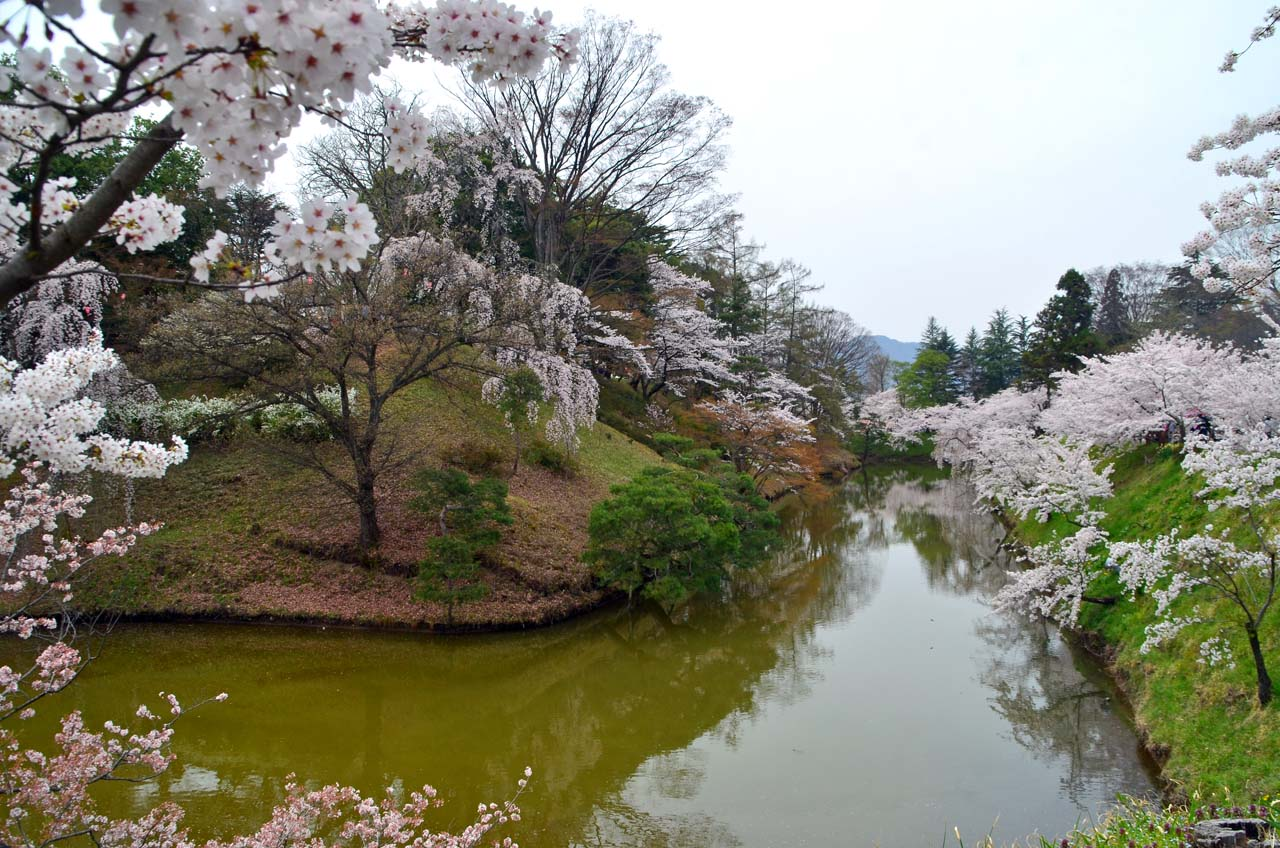 D70_9007上田城跡の桜