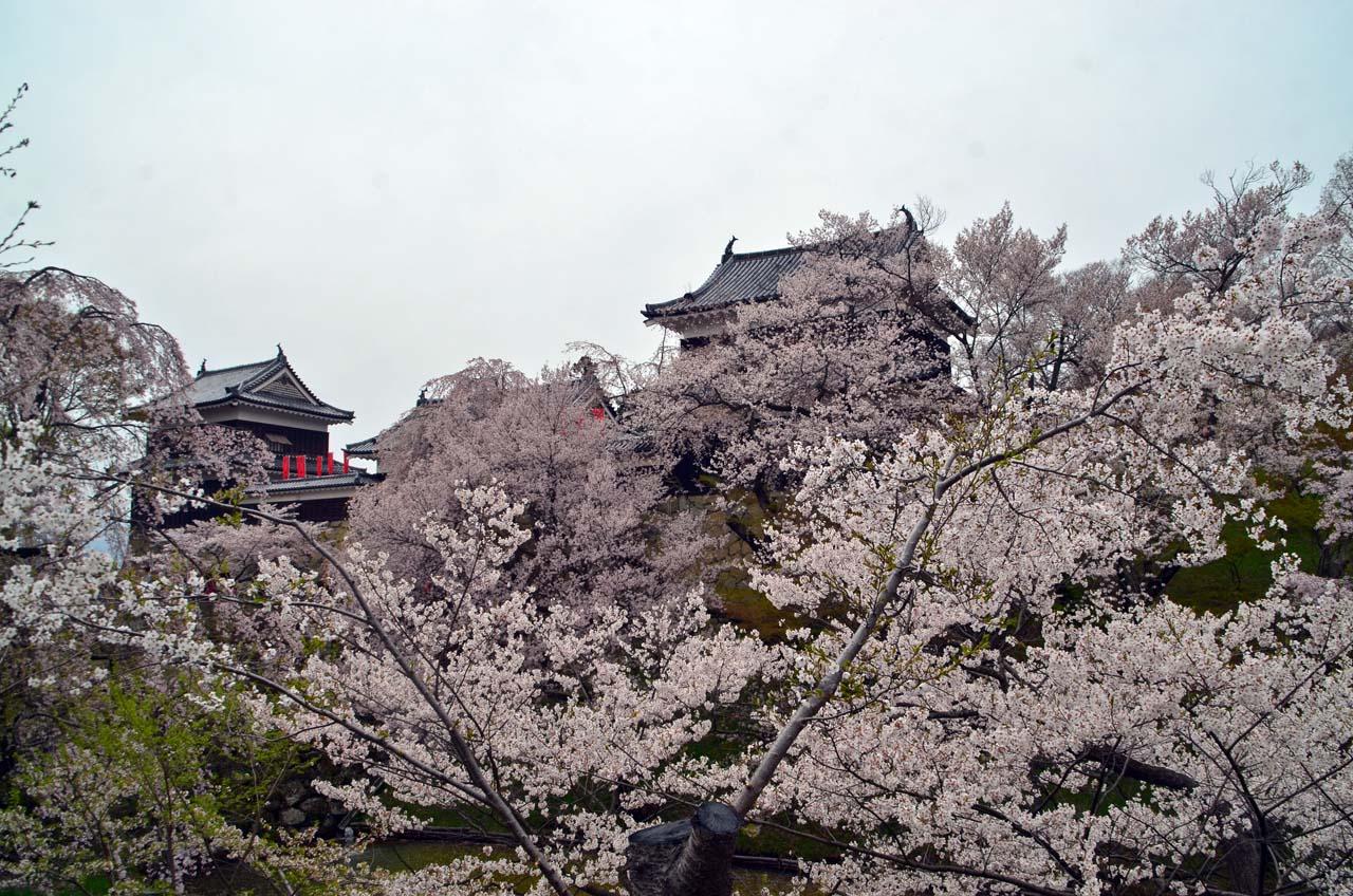 D70_8995上田城跡の桜