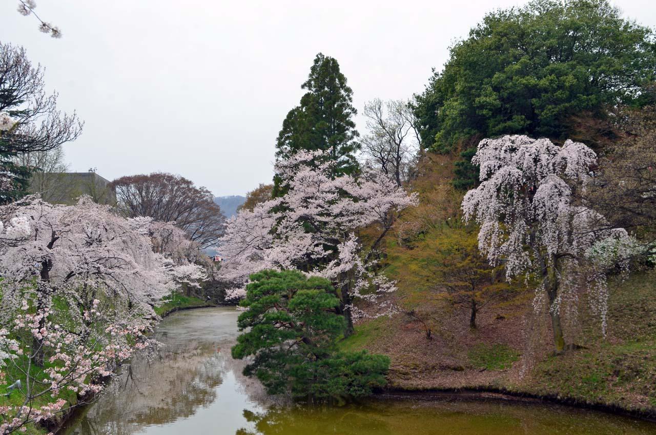D70_9014上田城跡の桜