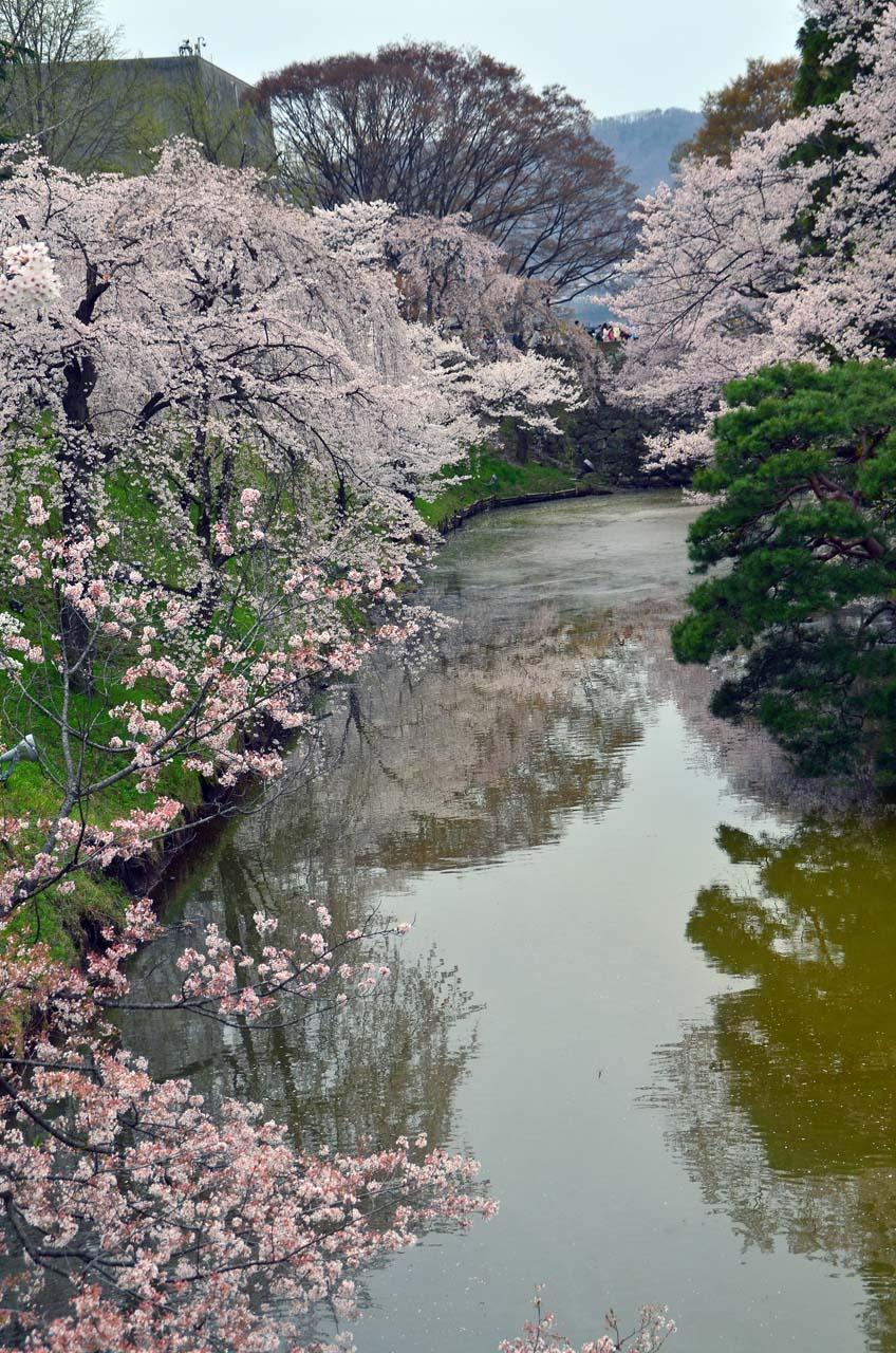 D70_9016上田城跡の桜