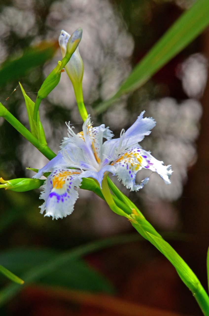 D70_0200今の庭の花