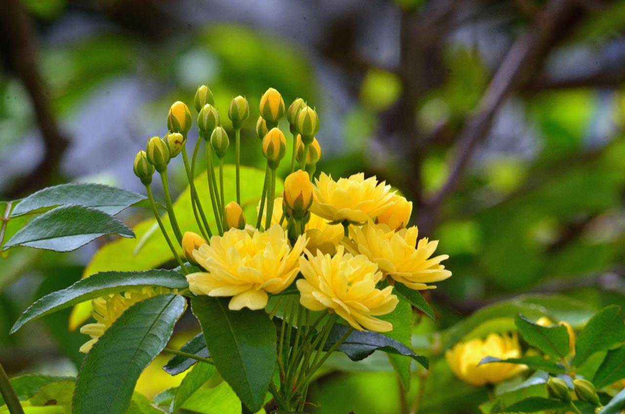 D70_0210今の庭の花