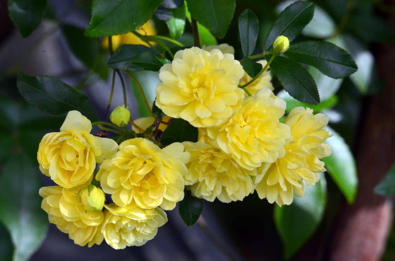 D70_0206今の庭の花