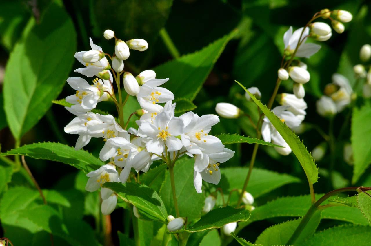 D70_0221今の庭の花