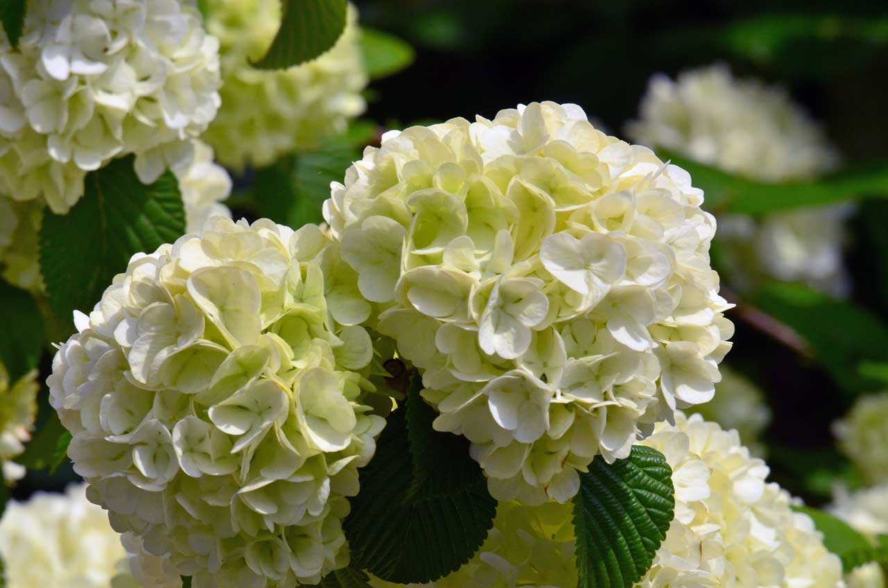 D70_0219今の庭の花
