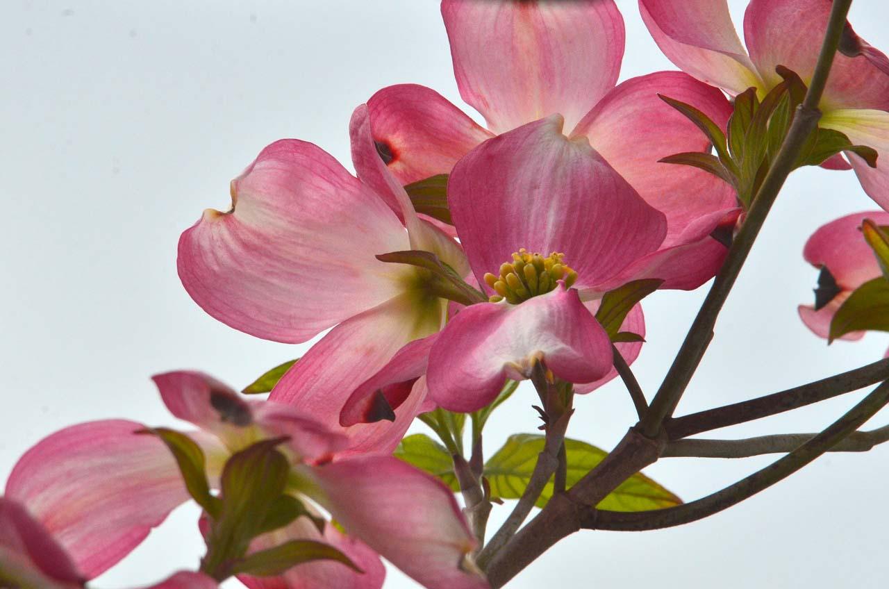 D70_0240今の庭の花