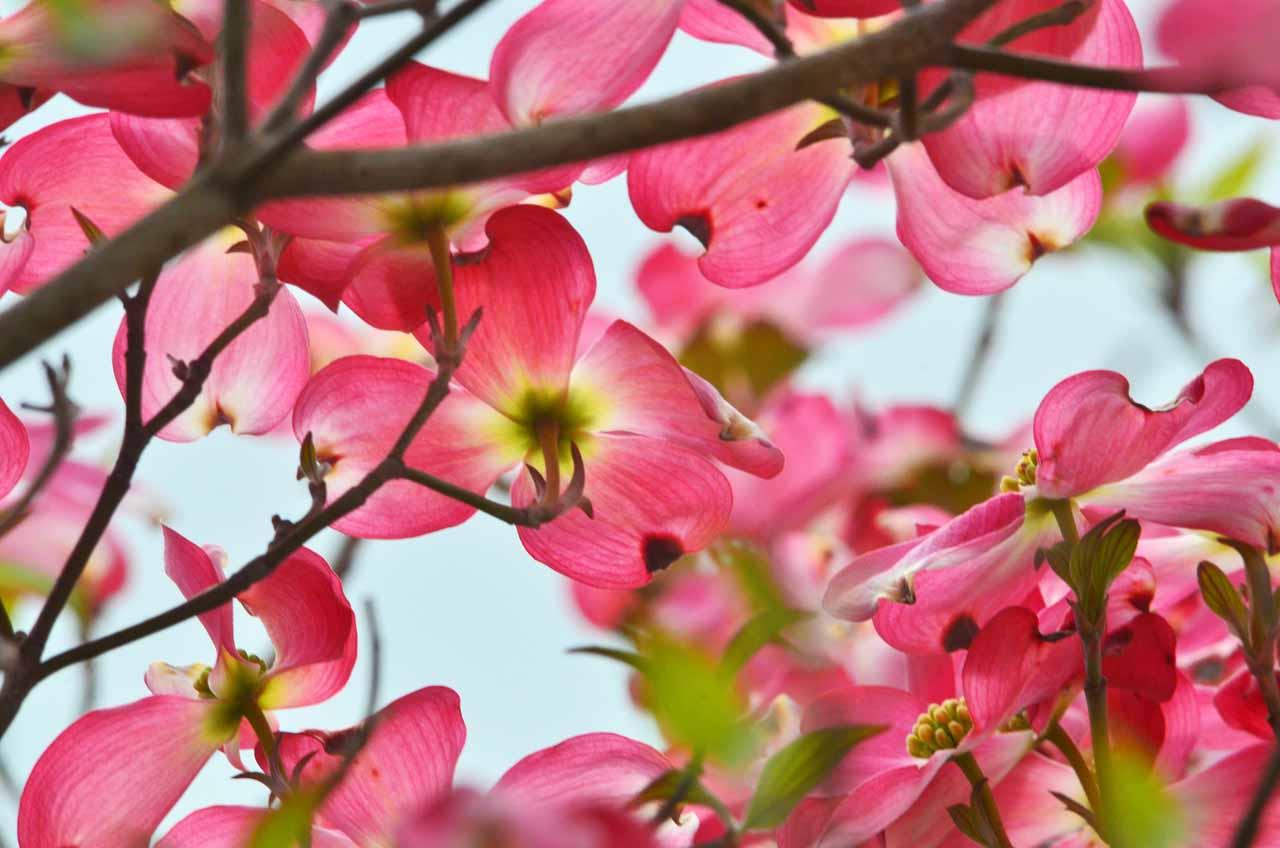 D70_0242今の庭の花